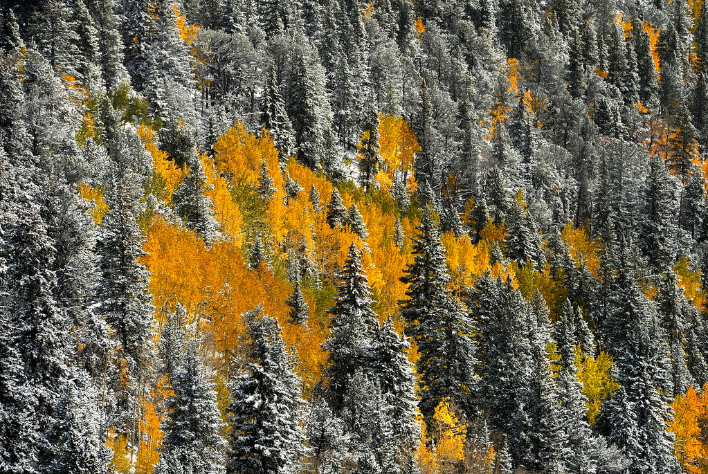Description of . IDAHO SPRINGS, CO - OCTOBER 04: The two seasons, fall and winter, collide as a snow storm moves into the Colorado mountains near Idaho Springs, October 04, 2013. The mountain could see up to a foot of snow from the storm. (Photo By RJ Sangosti/The Denver Post)