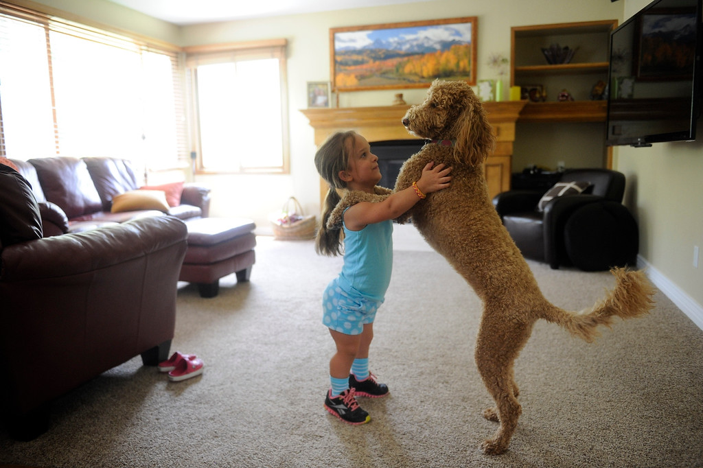 Description of . GOLDEN, CO. - JUNE 22: Mia Towl, 9, dances with her dog, Kona, in her living room on June 22, 2013.  (Photo By Grant Hindsley/The Denver Post)
