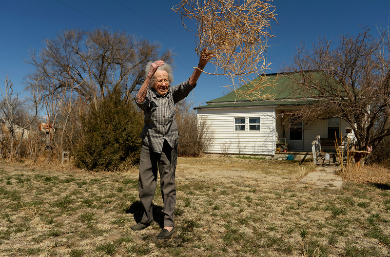 KARVAL, CO - MARCH 31: Alice Webb, 97, tosses tumbleweeds from her front yard in Karval, Monday, March 31, 2014.