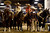Rancheros sit on their horses before taking the arena during National Western Stock Show's Mexican Rodeo Extravaganza at the Denver Coliseum on Sunday, Jan. 13, 2013. AAron Ontiveroz, The Denver Post