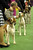Sporting Group dogs line up for judging during the Westminster Kennel Club Dog Show February 12, 2013 at Madison Square Garden in New York.  STAN HONDA/AFP/Getty Images