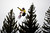 ASPEN, CO. - JANUARY 26:  Spencer O'Brien get's air during the women's snowboard slopestyle finals at the 2013 Aspen X Games on Buttermilk Mountain on January 26, 2013.