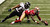 Tarell Brown #25 of the San Francisco 49ers recovers a fumble by Ray Rice #27 of the Baltimore Ravens in the third quarter during Super Bowl XLVII at the Mercedes-Benz Superdome on February 3, 2013 in New Orleans, Louisiana.  (Photo by Win McNamee/Getty Images)
