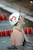 Olympic gold medalist Missy Franklin of Regis Jesuit is in the swimming meet Regis Jesuit vs. Highlands Ranch at Regis Jesuit swimming pool on Tuesday. Aurora. CO, January 8, 2013.  Hyoung Chang, The Denver Post