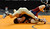 DENVER, CO. - FEBRUARY 21: Classical Academy wrestler Nathaniel Johnston, bottom, was pinned by Holy Family sophomore Julian Prieto, top, in the 120-pound weight class in 3A Thursday. The CHSAA State Wrestling Tournament kicked off Thursday, February 21, 2013 at the Pepsi Center in Denver. His  (Photo By Karl Gehring/The Denver Post)