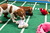 Dogs playing on the field during Puppy Bowl IX(Photo credit: Animal Planet)
