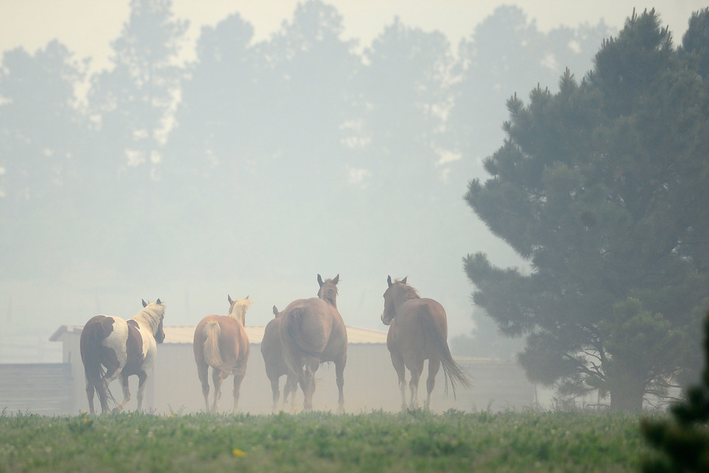 Description of . COLORADO SPRINGS, CO - JUNE 13: Horse run as wind blows smoke into its pasture as the Black Forest fire burns east of Colorado Springs. (Photo by AAron Ontiveroz/The Denver Post)