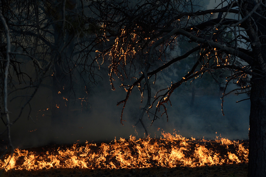 Description of . COLORADO SPRINGS, CO - JUNE 11: Fire runs along the bed of the forest off of Herring Road in the Black Forest northeast of Colorado Springs, CO on June 11, 2013. Many homes have already been lost to the raging fire that continues to burn out of control. Photo by Helen H. Richardson/The Denver Post)