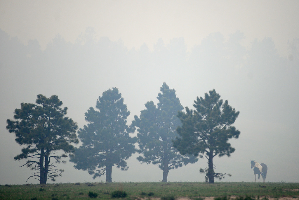 Description of . COLORADO SPRINGS, CO - JUNE 13: A horse grazes as winds blow smoke into its pasture as the Black Forest fire burns east of Colorado Springs. (Photo by AAron Ontiveroz/The Denver Post)