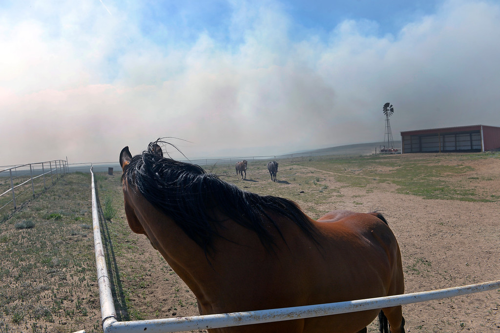 Description of . COLORADO SPRINGS, CO - JUNE 12: As their owners work aggressively to create a fire line around their ranch just off of Black Forest Road to save it from the Black Forest Fire, their horses watch attentively as smoke from the fire swirls around them on their ranch off of Black Forest Road  on June 12, 2013.   Photo by Helen H. Richardson/The Denver Post)