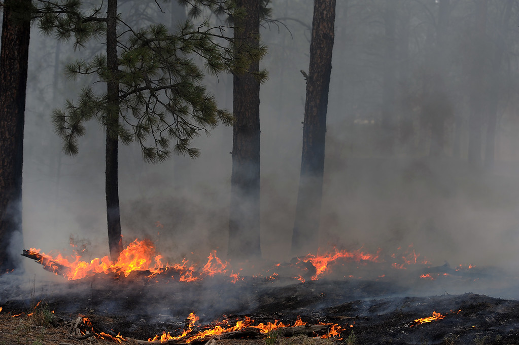 Description of . BLACK FOREST, CO - JUNE 13:  Trees smolder in the midst of the Black Forest Fire on June 13, 2013.  Photo by Helen H. Richardson/The Denver Post)