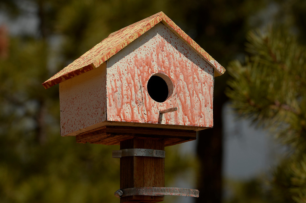 Description of . BLACK FOREST, CO - JUNE 17:   A birdhouse is covered in slurry but still standing inside the Black Forest Burn area on June 17, 2013.   Photo by Helen H. Richardson/The Denver Post)