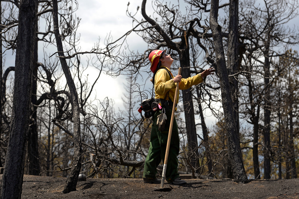 Description of . BLACK FOREST, CO - JUNE 17:   Salida Fire Department firefighter Brandie Smith, looks over burned property in the Black Forest Fire zone on June 17, 2013.  The crew is checking for hotspots as well as marking  trees that they deem dangerous that might fall over  on burned properties.  They mark them and sawyers can come in later to cut them down.  The crew also looks above in the burned canopy of trees looking for any limbs or trees that might fall over that might injure someone.  The fire is now 75% contained and recent rains are helping firefighters. Photo by Helen H. Richardson/The Denver Post)