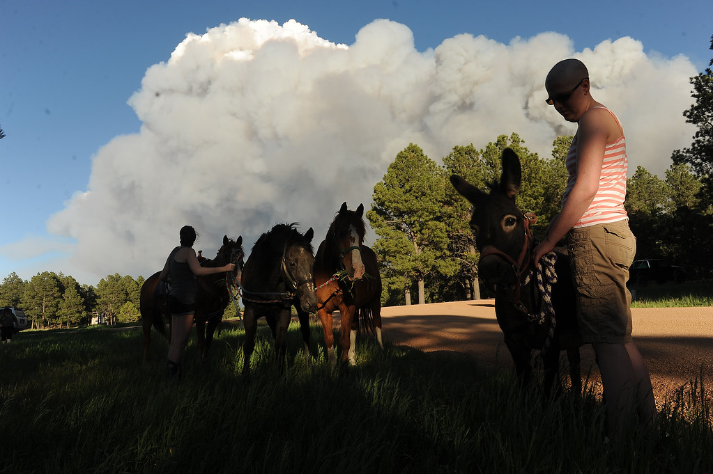 Description of . COLORADO SPRINGS, CO - JUNE 11: Katie Adamson, right, holds onto a donkey that she found wandering along the road, while her sister Heather Stanley, left, attends to their horses off of Herring Road in the midst of the Black Forest Fire in Colorado Springs, CO on June 11, 2013.. Many homes have already been lost to the raging fire that continues to burn out of control. Photo by Helen H. Richardson/The Denver Post)