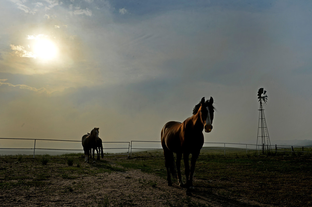 Description of . COLORADO SPRINGS, CO - JUNE 12: Horses wait out the fire on a ranch off of Black Forest Road in the midst of the Black Forest Fire on June 12, 2013.  .   Photo by Helen H. Richardson/The Denver Post)