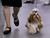 DENVER, CO. - FEBRUARY 15: The 18th annual Rocky Mountain Cluster Dog Show begins at the National Western Complex with over 150 different breeds showing. The dogs can be seen in conformation, obedience, and agility competitions which has dogs running through tunnels, and leaping over jumps. The show runs through Feb. 18 and is open to the public. (Photo By Kathryn Scott Osler/The Denver Post)