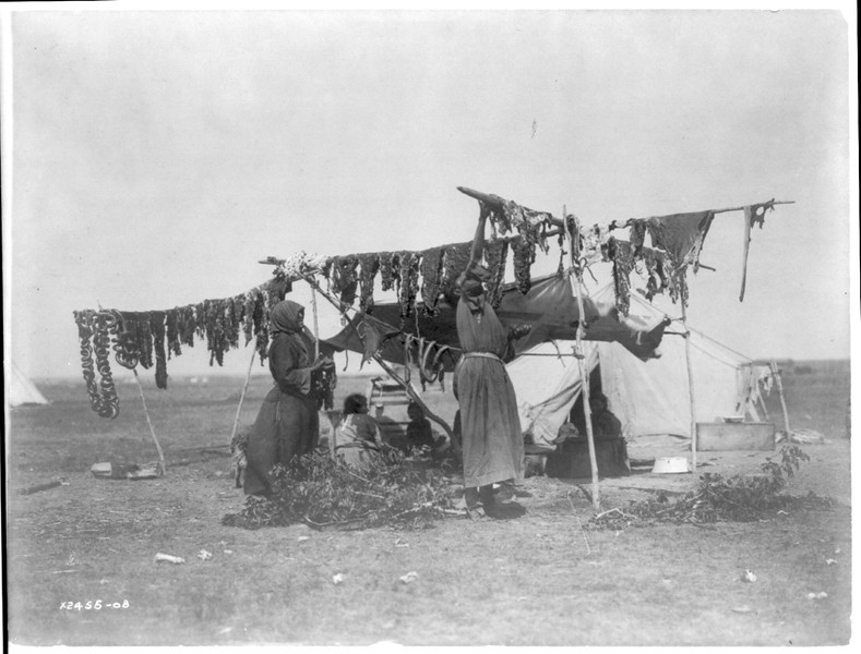 Description of  Title: Drying meat.  <br />Date Created/Published: c1908 November 19.  <br />Summary: Two Dakota women hanging meat to dry on poles, tent in background.  <br />Photograph by Edward S. Curtis, Curtis (Edward S.) Collection, Library of Congress Prints and Photographs Division Washington, D.C.