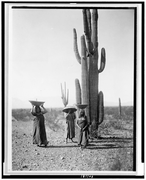 Description of  Title: [Saguaro gatherers, Maricopa tribe]  <br />Date Created/Published: 1907, c1907.  <br />Summary: Three Maricopa women with baskets on their heads, standing by Saguaro cacti.  <br />Photograph by Edward S. Curtis, Curtis (Edward S.) Collection, Library of Congress Prints and Photographs Division Washington, D.C.