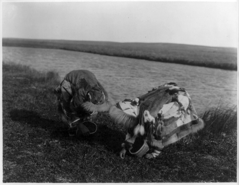 Description of  Title: Berry pickers, Kotzebue.  <br />Date Created/Published: c1929 February 28.  <br />Summary: Two Eskimos wearing hooded full-length fur parkas bent over picking berries from plants on the ground.  <br />Photograph by Edward S. Curtis, Curtis (Edward S.) Collection, Library of Congress Prints and Photographs Division Washington, D.C.