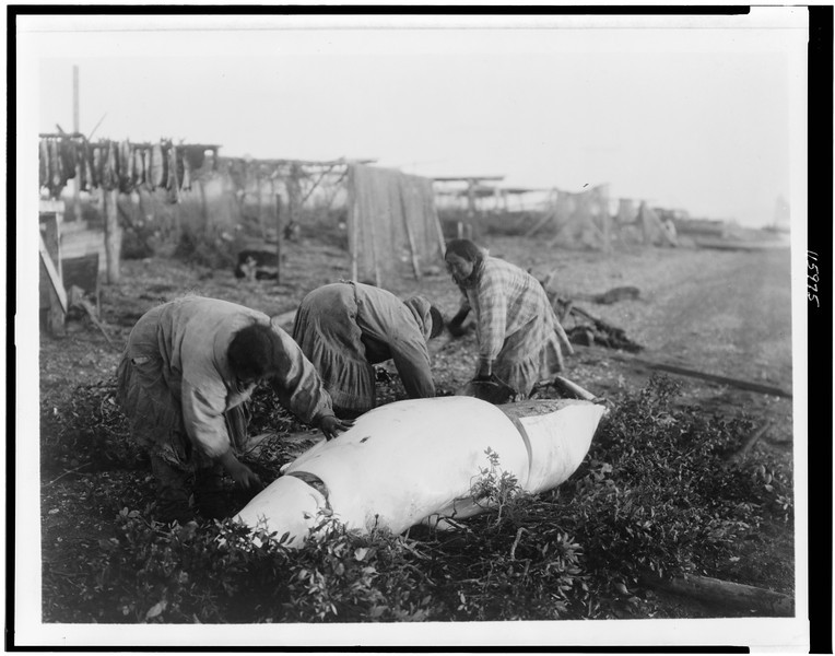 Description of  Title: Cutting up a beluga--Kotzebue.  <br />Date Created/Published: c1929.  <br />Summary: Three women cutting up a beluga whale.  <br />Photograph by Edward S. Curtis, Curtis (Edward S.) Collection, Library of Congress Prints and Photographs Division Washington, D.C.