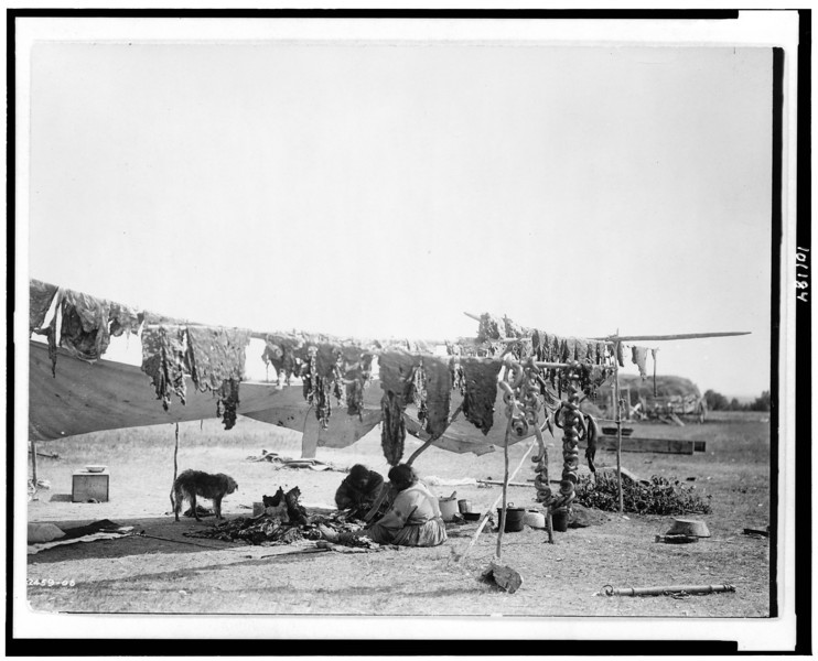 Description of  Title: In camp.  <br />Date Created/Published: 1908.  <br />Summary: Two Dakota Sioux Indians cutting meat and drying it on poles.  <br />Photograph by Edward S. Curtis, Curtis (Edward S.) Collection, Library of Congress Prints and Photographs Division Washington, D.C.