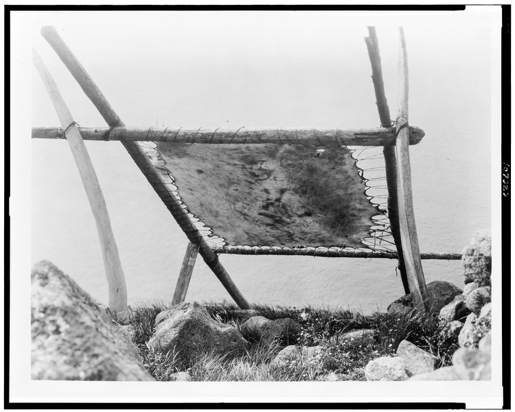 Description of  Title: [Drying walrus hide, Diomede, Alaska].  <br />Date Created/Published: c1929.  <br />Photograph by Edward S. Curtis, Curtis (Edward S.) Collection, Library of Congress Prints and Photographs Division Washington, D.C.