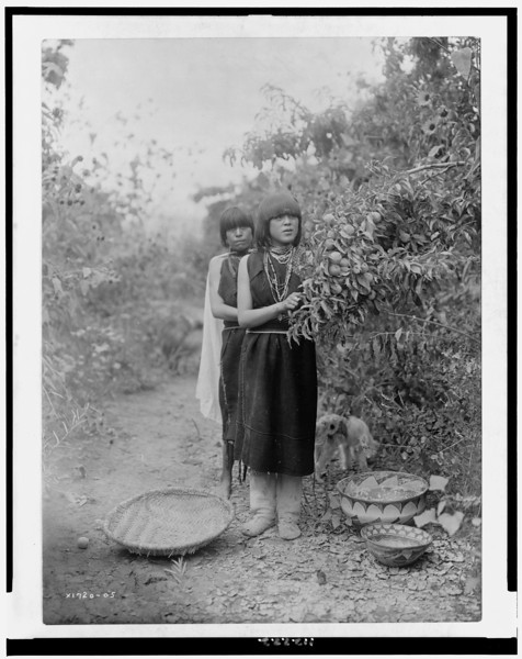 Description of  Title: The fruit gatherers.  <br />Date Created/Published: c1905.  <br />Summary: Two Tewa girls picking fruit with basket, bowls on the ground.  <br />Photograph by Edward S. Curtis, Curtis (Edward S.) Collection, Library of Congress Prints and Photographs Division Washington, D.C.