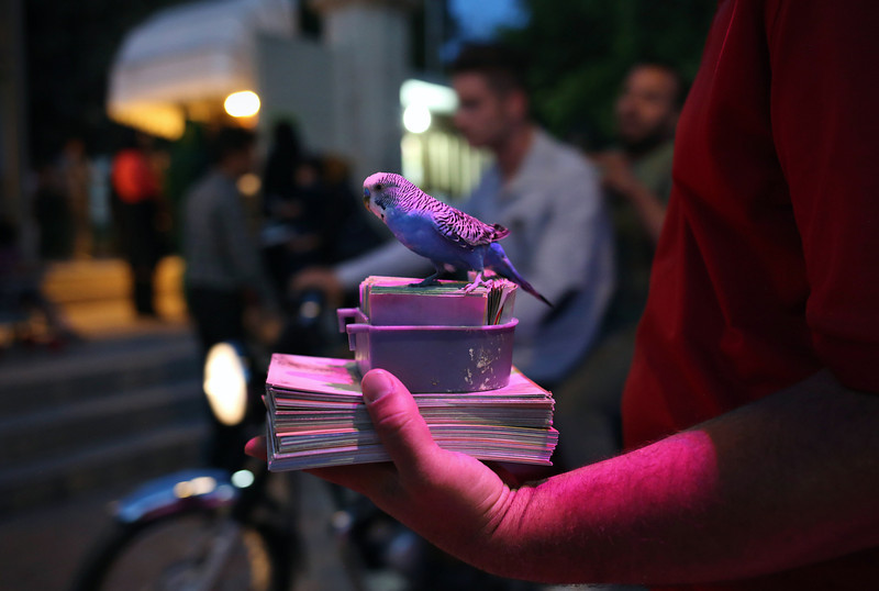 "Description of  SHIRAZ, IRAN - MAY 29:  A parakeet awaits customers in order to choose a ""fortune"" outside of the beloved Iranian poet Hafez's tomb on May 29, 2014 in Shiraz, Iran. Customers pay a handler for the bird to choose a piece of paper from a box with a verse of Hafez's poetry meant to give advice for future endeavors. Shiraz, celebrated for more than 2,000 years as the heartland of Persian culture, is known as the home of Iranian poetry and for its progressive attitudes and tolerance. Like all of Iran, this week Shiraz observes the 25th anniversary of the death and continued legacy of the Ayatollah Khomeini, the father of the Islamic revolution.  (Photo by John Moore/Getty Images)"