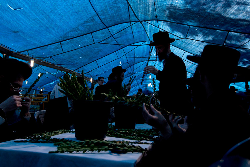 """Description of  Ultra Orthodox Jewish men check a branch of the myrtle tree, or Hadas, to determine if is ritually acceptable as one of the four items used as a symbol on the Jewish holiday of Sukkot, in Jerusalem, Tuesday, Oct. 7, 2014. According to Jewish tradition, during the Sukkot holiday, known as the Feast of the Tabernacles, Jews are commanded to bind together a palm frond, or """"lulav,"""" with two other branches, along with an """"etrog,"""" they make up the """"four species"""" used in holiday rituals. (AP Photo/Sebastian Scheiner)"""