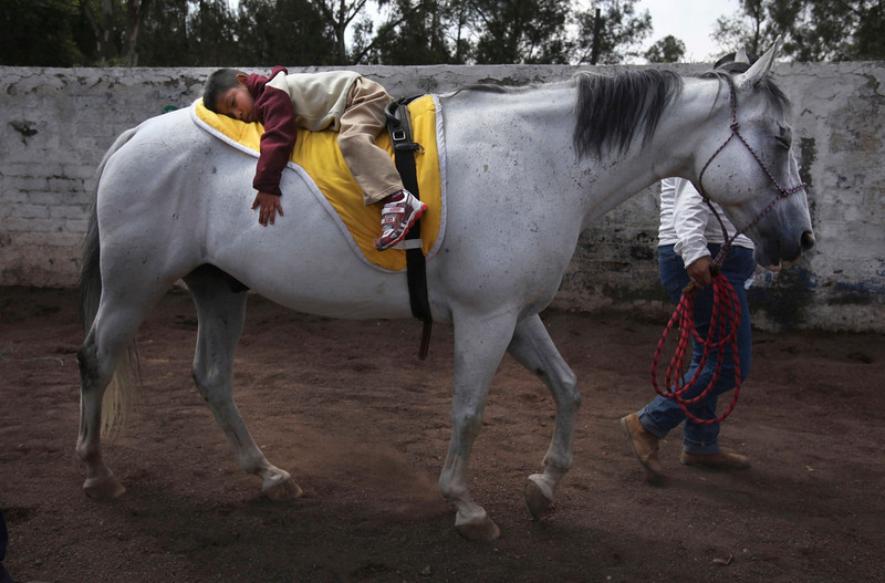 """Description of  In this Aug. 26, 2014 photo, 4-year-old patient Saul Valverde rides lying on the back of Andariego, a 19-year-old veteran horse retired from """"charreria,"""" the Mexican version of a rodeo, at a corral in southern Mexico City. Andariego now works as a therapy horse, helping children with special needs. Horses can live another 20 years after their rodeo days. The lucky ones find second careers in breeding or as therapy horses. (AP Photo/Marco Ugarte)"""