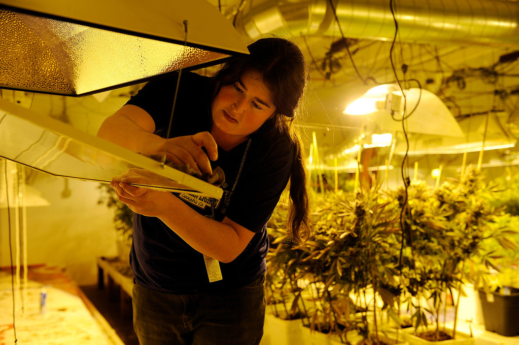Description of . DENVER, CO - MARCH 27: Hollie Cooper cleans a set of grow lights after harvesting the cannabis plants it was help grow at Northern Lights grow facility in Denver, Colorado on March 27, 2014. The retail marijuana business has been booming in Edgewater. No crime or problems have been reported to police by retail marijuana businesses since legal recreational sales began on January 1st.(Photo by Seth McConnell/The Denver Post)