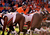 Denver Broncos quarterback Peyton Manning #18 calls the play prior to the snap resulting in a touchdown catch by Denver Broncos defensive tackle Mitch Unrein #96 during the first quarter.  The Denver Broncos vs The Tampa Bay Buccaneers at Sports Authority Field Sunday December 2, 2012. John Leyba, The Denver Post