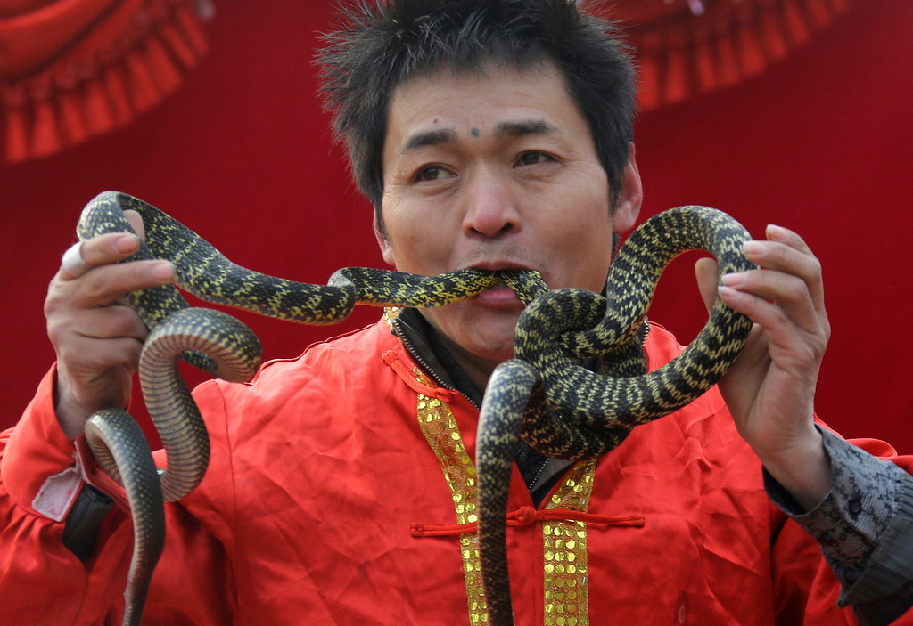 Description of . A performer inserts two live snake heads into his mouth during a performance at the Ditan Temple Fair celebrating the Chinese Lunar New Year in Beijing February 11, 2013.  REUTERS/Jason Lee