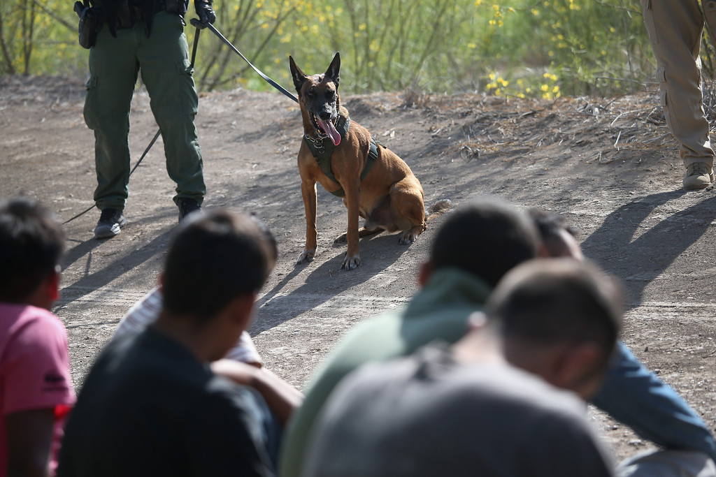 Description of . MISSION, TX - APRIL 11:  A U.S. Border Patrol canine team stands nearby after helping detain a group of undocumented immigrants near the U.S.-Mexico border on April 11, 2013 near Mission, Texas. A group of 16 immigrants from Mexico and El Salvador said they crossed the Rio Grande River from Mexico into Texas during the morning hours before they were caught. The Rio Grande Valley sector of the border has had more than a 50 percent increase in illegal immigrant crossings from last year, according to the Border Patrol. Agents say they have also seen an additional surge in immigrant traffic since immigration reform negotiations began this year in Washington D.C. Proposed refoms could provide a path to citizenship for many of the estimated 11 million undocumented workers living in the United States.  (Photo by John Moore/Getty Images)