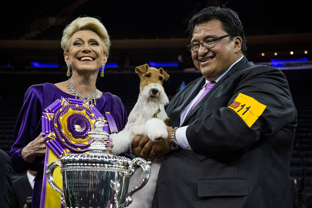 . NEW YORK, NY - FEBRUARY 11:  Sky, a Wire Fox Terrier (C), poses for a photo with her handler, Gabriel Rangel (R) and Judge Betty Regina Leininger,  after winning the Best in Show category in the Westminster Dog Show on February 11, 2014 in New York City. The annual dog show has been showcasing the best dogs from around world for the last two days in New York.  (Photo by Andrew Burton/Getty Images)