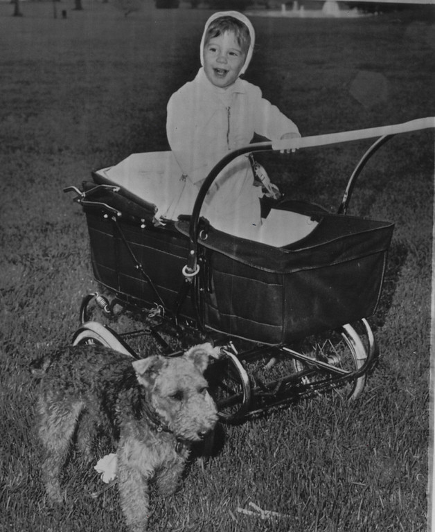 Description of . John Jr., son of President and Mrs. Kennedy, stands gleefully in his carriage on the south grounds of the White House as his dog, Charlie, stands in the foreground in 1962. Associated Press file