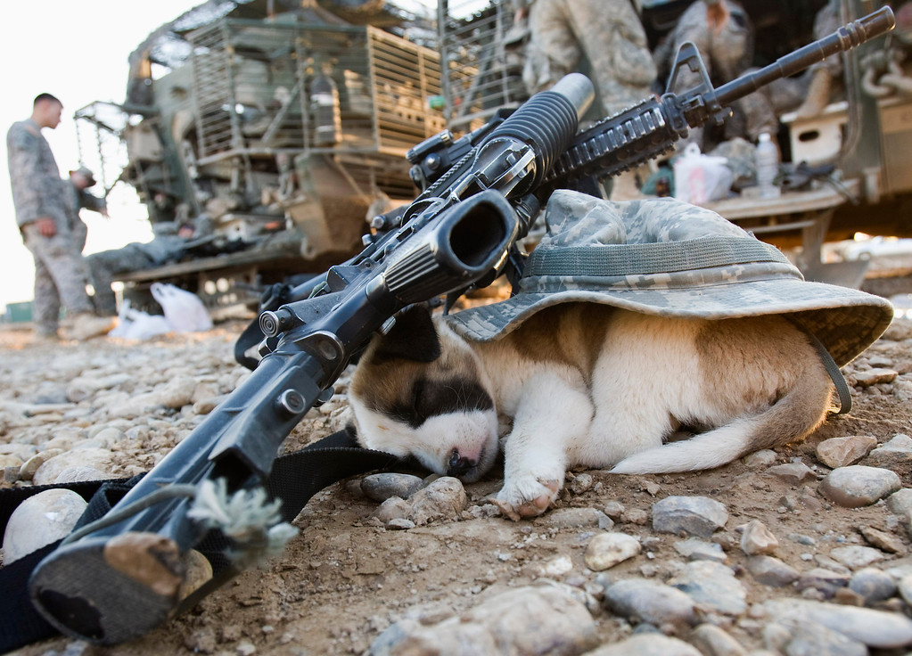 Description of . A puppy sleeps under a U.S soldier\'s hat and rifles in Baquba, in Diyala province some 65 km (40 miles) northeast of Baghdad November 6, 2008. REUTERS/Goran Tomasevic