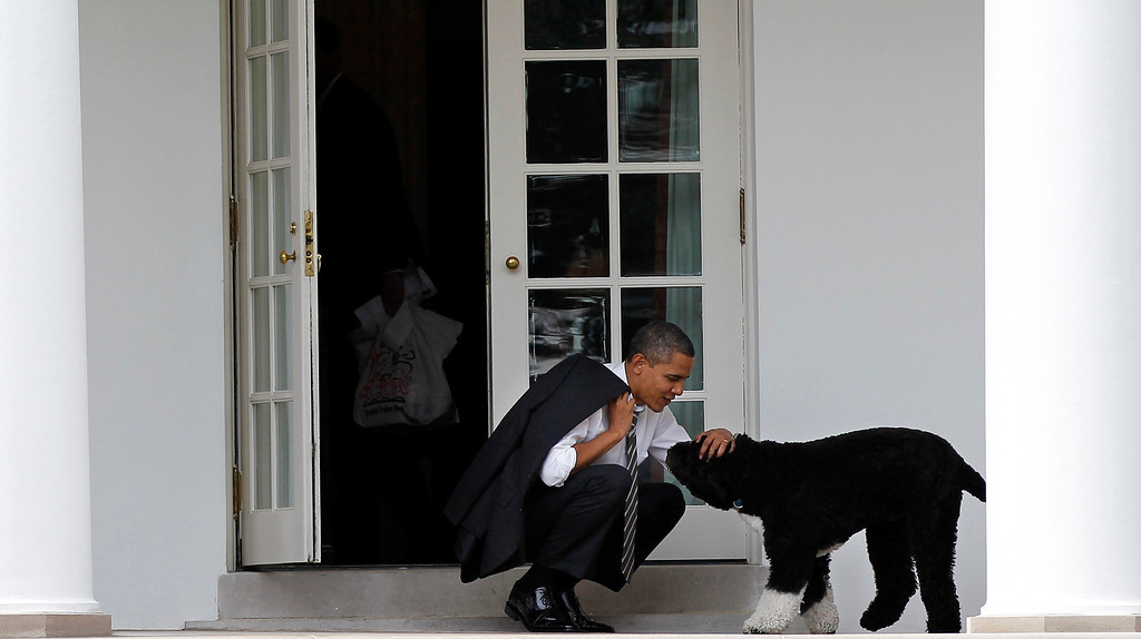 Description of . In this March 15, 2012 file photo, President Barack Obama pets the family dog Bo, a Portuguese water dog, outside the Oval Office of the White House in Washington. (AP Photo/Pablo Martinez Monsivais, File)