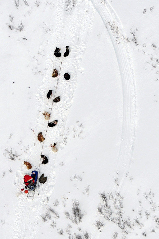 Description of . A musher and dog team rest between the Rohn and Nikolai checkpoints in Alaska during the Iditarod Trail Sled Dog Race on Tuesday, March 5, 2013. (AP Photo/The Anchorage Daily News, Bill Roth)