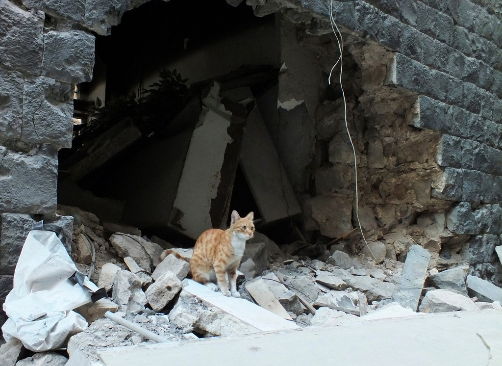 Description of . A cat sits on the debris of a damaged house in the neighborhood of old Homs September 9, 2012.  REUTERS/ Yazen Homsy