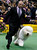 Handler Colton Johnson runs with Swagger, an Old English Sheepdog and winner of the Herding Group, during competition at the 137th Westminster Kennel Club Dog Show at Madison Square Garden in New York, February 11, 2013. Swagger will advance to the Best in Show competition on February 12. REUTERS/Mike Segar