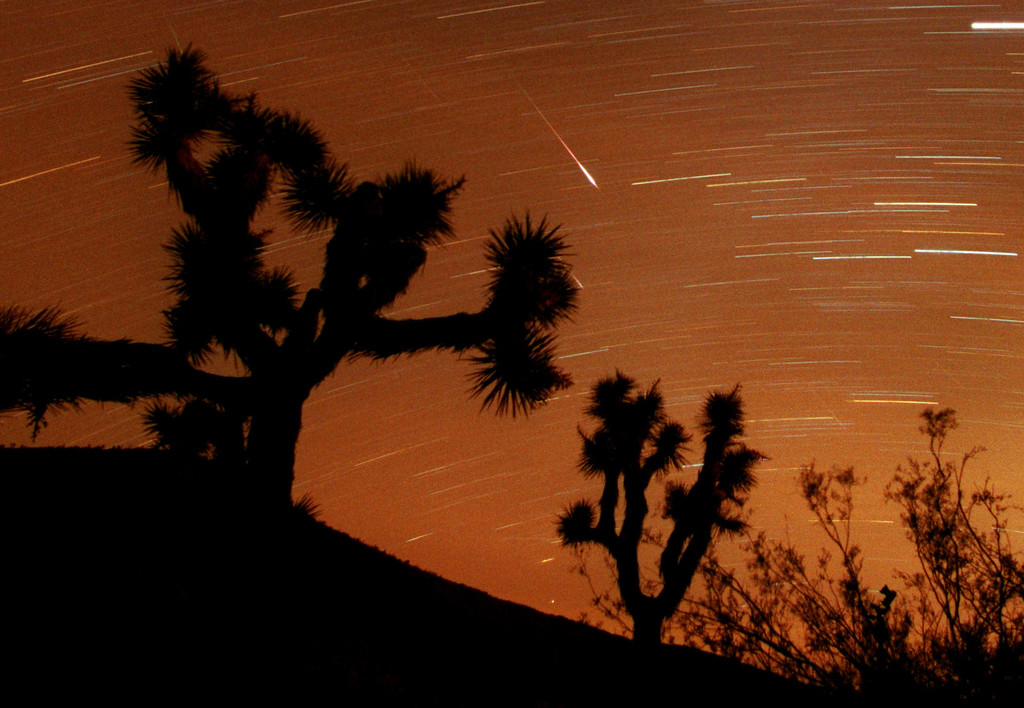 Description of . Several Leonids meteors are seen streaking through the sky over Joshua Tree National Park, Calif., looking to the south in the Southern California desert in this approximately 25-minute time exposure ending at 3:45 a.m. PST (11:45 UT) Sunday, Nov. 18, 2001. Two are visible at center, one partly hidden behind a Joshua tree branch.  Two more faint meteors are just above the scrub brush at lower right, and two other faint meteors appear at top and center left.. The Leonid shower occurs each November, when the Earth's orbit takes it through a trail of dust particles left by the Comet Tempel-Tuttle, which swings around the sun once every 33 years. The horizontal streaks are stars and or planets. (AP Photo/Reed Saxon)
