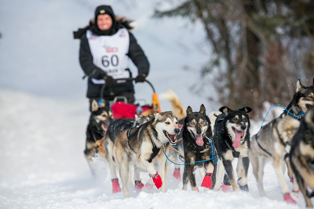 Description of . Cindy Abbott's team charges down the trail after the re-start of the Iditarod dog sled race in Willow, Alaska March 3, 2013. From Willow, the race runs for almost 1000 miles as it crosses the state.   REUTERS/Nathaniel Wilder