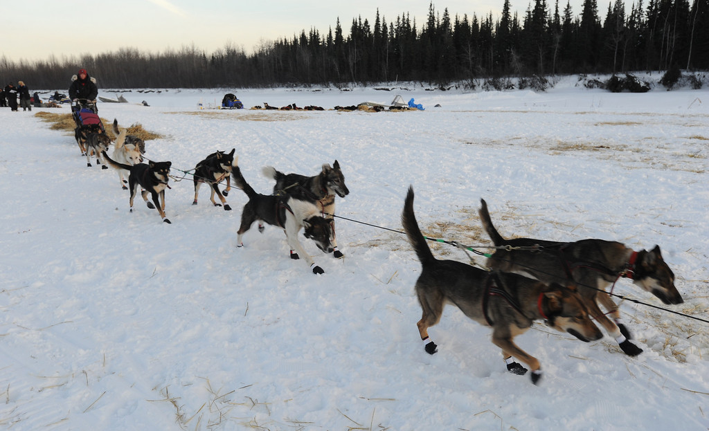 Description of . Veteran Iditarod musher Kelley Griffin of Wasilla leaves the Athabaskan village of Nikolai, Alaska, on Tuesday, March 5, 2013.  (AP Photo/Bill Roth, Anchorage Daily News)