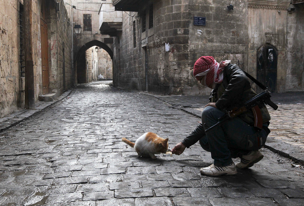 Description of . A Free Syrian Army fighter feeds a cat in the old city of Aleppo January 6, 2013. REUTERS/Muzaffar Salman