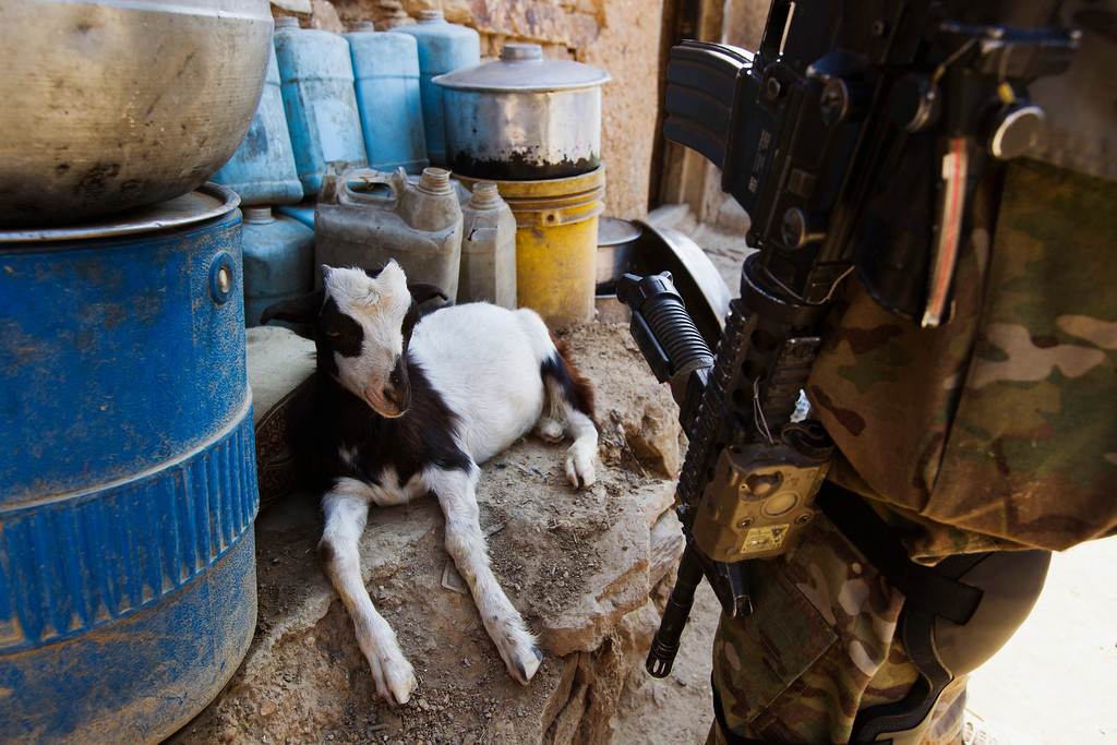 . A goat sits on a ledge behind Staff Sergeant James Davis from the 4th Platoon, Dagger Company of the 2nd Battalion, 12th Infantry Regiment during a patrol near Combat Outpost Nangalam in the Pech River Valley of Afghanistan\'s Kunar Province July 1, 2012.  REUTERS/Lucas Jackson