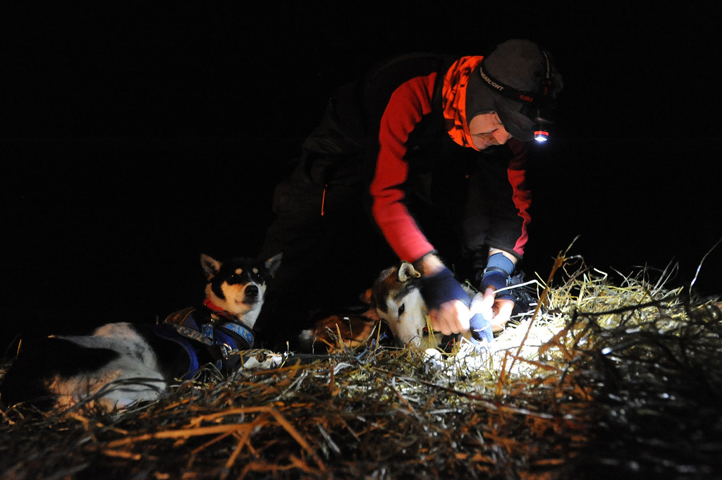Description of . Allen Moore puts booties on his dog team before leaving the village of Nikolai, Alaska during the Iditarod Trail Sled Dog Race, Tuesday, March 5, 2013. (AP Photo/Anchorage Daily News, Bill Roth)