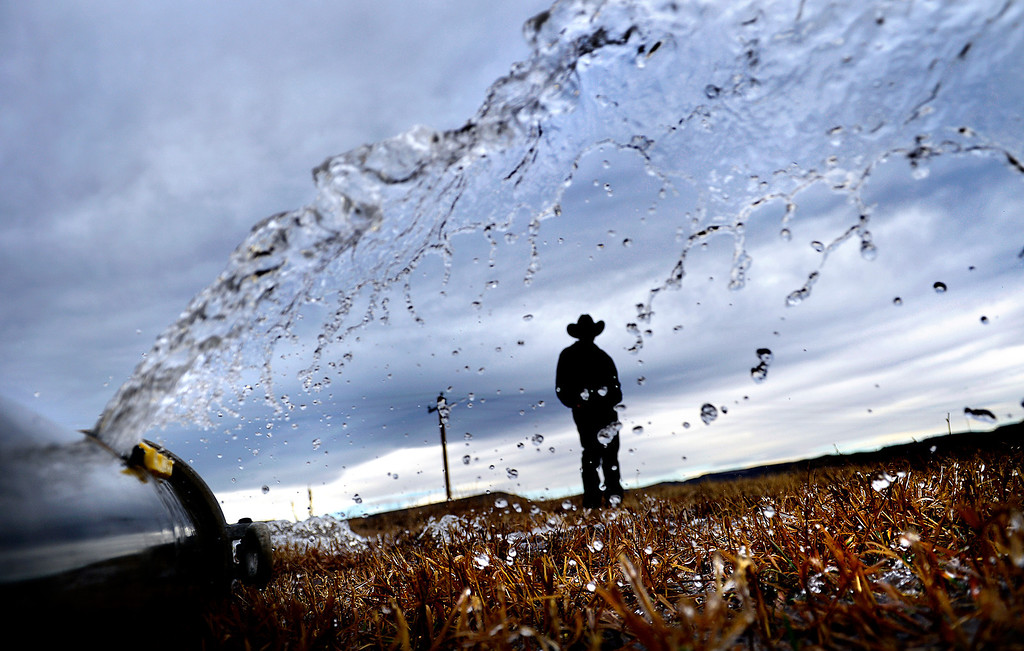Description of . Eldon Ackerman, of the Ackerman Farms, talks while standing in a barely field being irrigated on Wednesday, November 28, 2012. Farms could be affected by a shortage of water created by this summer's wildfires. AAron Ontiveroz, The Denver Post