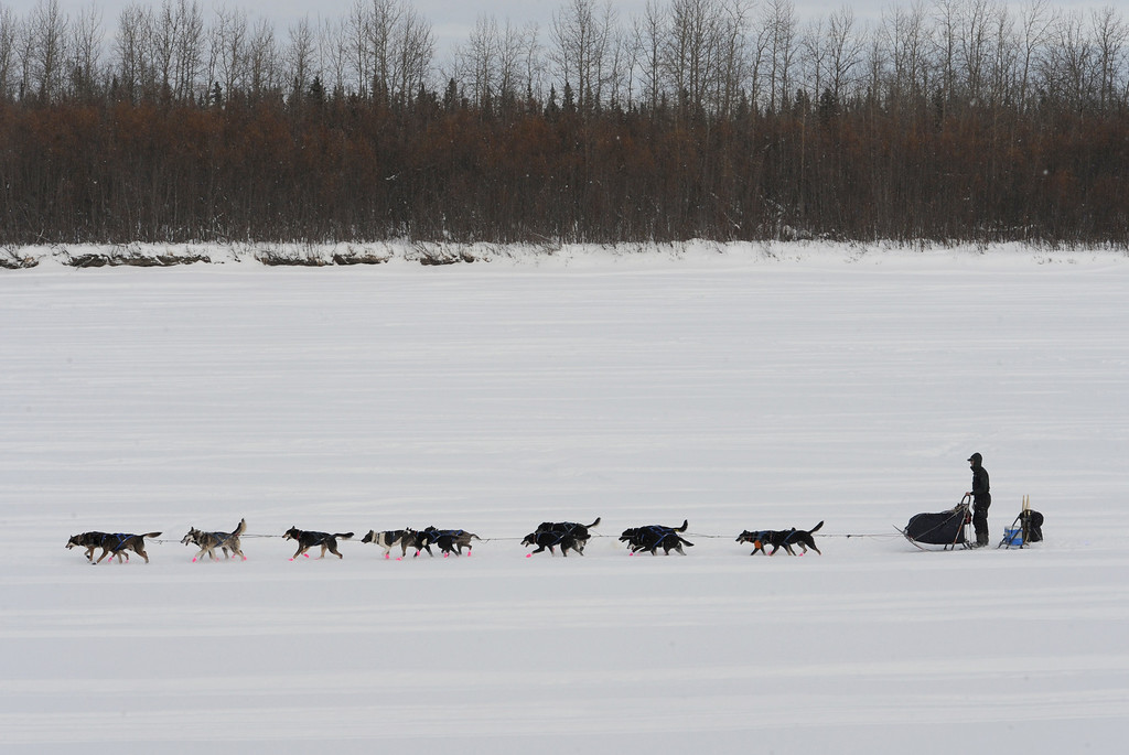 Description of . Musher Matt Failor drives his team down the Kuskokwim River after leaving the Iditarod checkpoint in McGrath on Wednesday, March 6, 2013. (AP Photo/The Anchorage Daily News, Bill Roth)