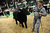 DENVER, CO- JANUARY 24:  Junior market beef grand champion winner Shilo Schaake, 15 of West Morlin, Kansas, takes Trevor his 1335 lbs. steer off the arena floor after becoming the junior market grand champion.  The Junior market beef grand champion and reserve grand  champion were chosen in the Stadium Arena at the National Western Stock Show on January 24th, 2013.  The two large mixed breed steer will be auctioned off January 25th.  (Photo By Helen H. Richardson/ The Denver Post)